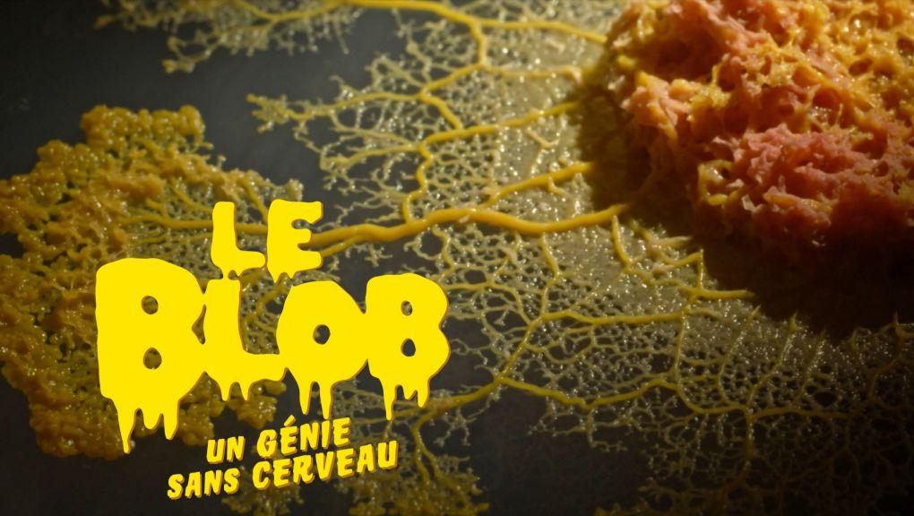 Le blob, un génie sans cerveau © Hauteville Productions