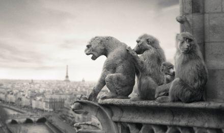 Ouverture du Parc zoologique de Paris