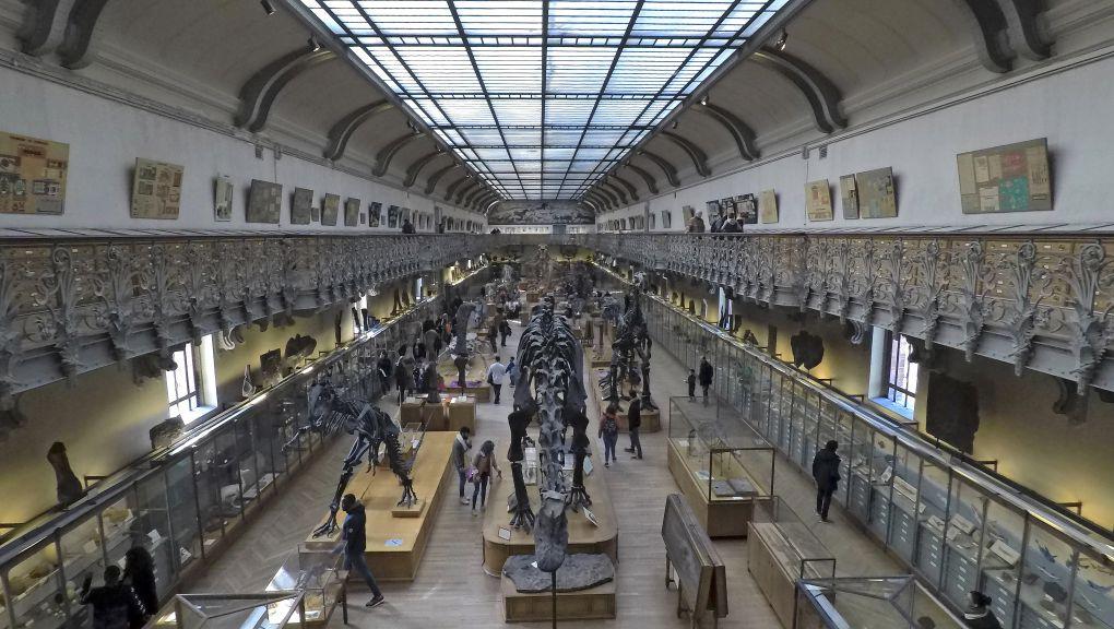 Galerie de Paléontologie © MNHN - JC Domenech