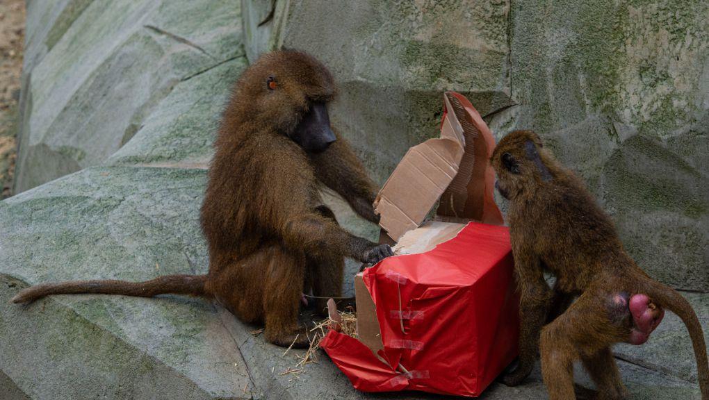 Noël au Parc zoologique de Paris © MNHN - F.-G. Grandin