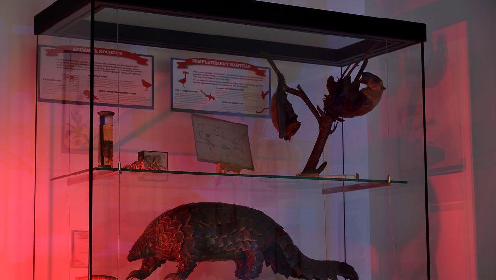 Exposition « Chimères, hybrides et autres créatures fantastiques » © MNHN - F.-G. Grandin