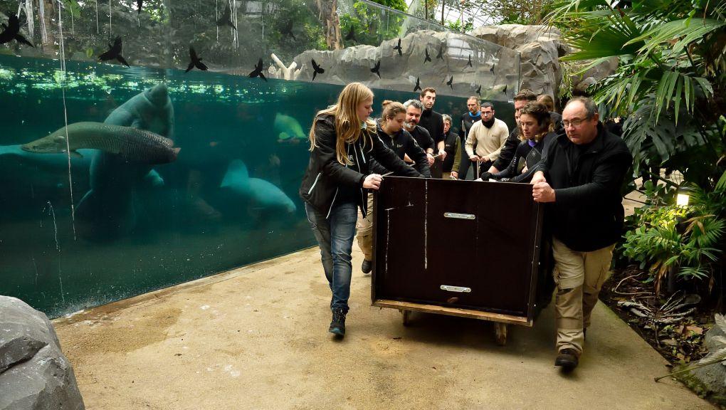 L'arrivée de Kalina au Parc zoologique de Paris © MNHN - F.-G. Grandin