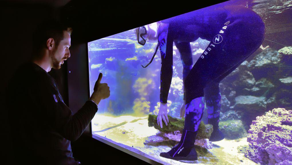Mise en place de l'aquarium récifal © MNHN - F.-G. Grandin