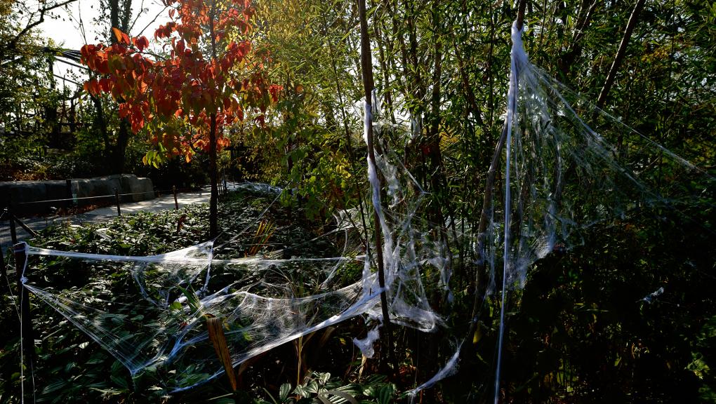 Halloween au zoo © MNHN – F-G. Grandin