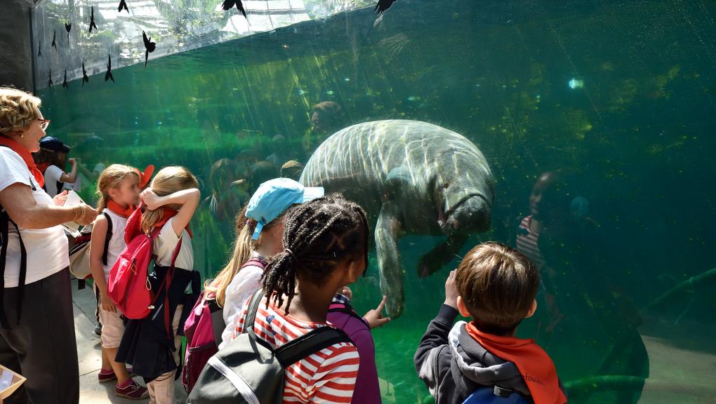 Le bassin des lamantins © MNHN – F-G. Grandin