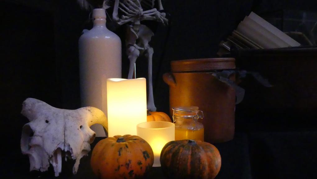 Cabinet de bizarreries zoologiques - Halloween au zoo © MNHN – C. Duwicquet