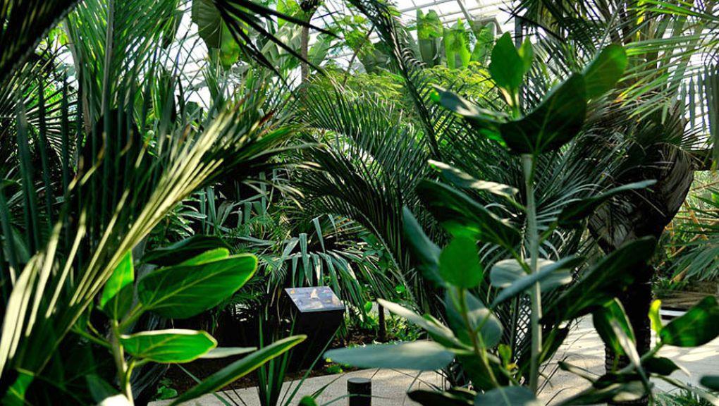 La végétation luxuriante de la Grande Serre tropicale © MNHN - François-Gilles Grandin