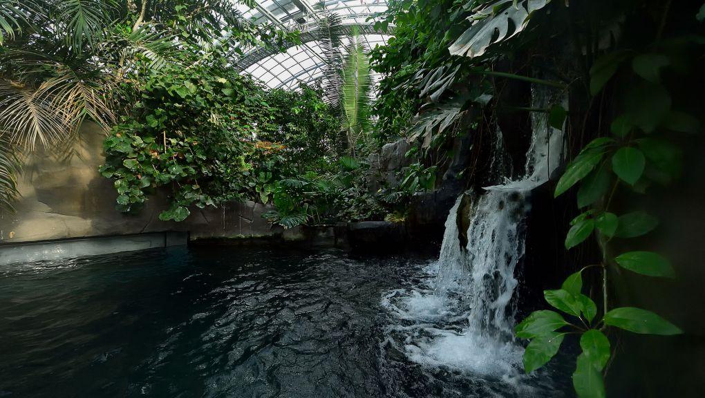 Végétation dans la serre tropicale © MNHN - F.-G. Grandin