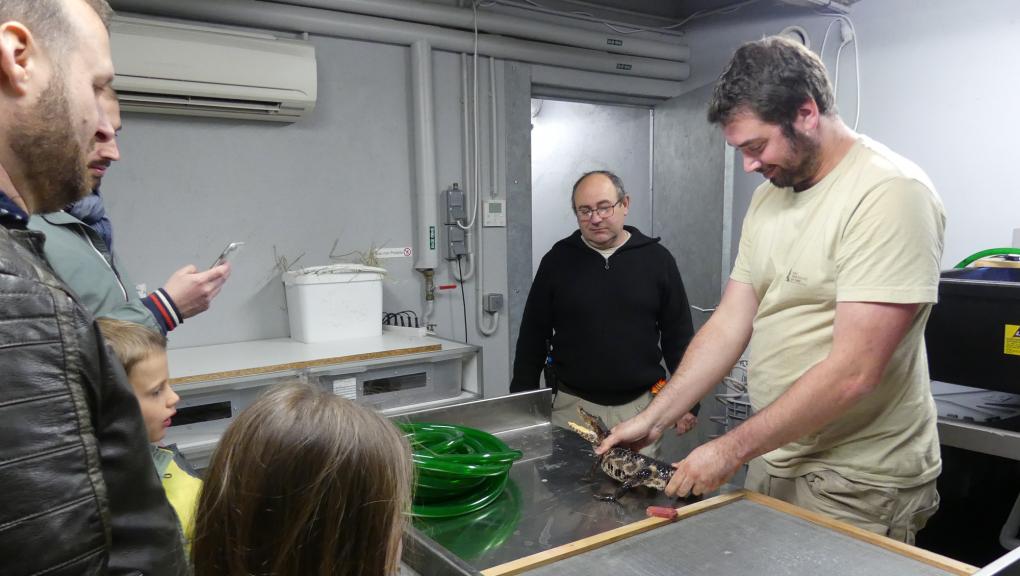 Mickaël, soigneur au vivarium, présente un jeune caïman nain © MNHN – C. Duwicquet