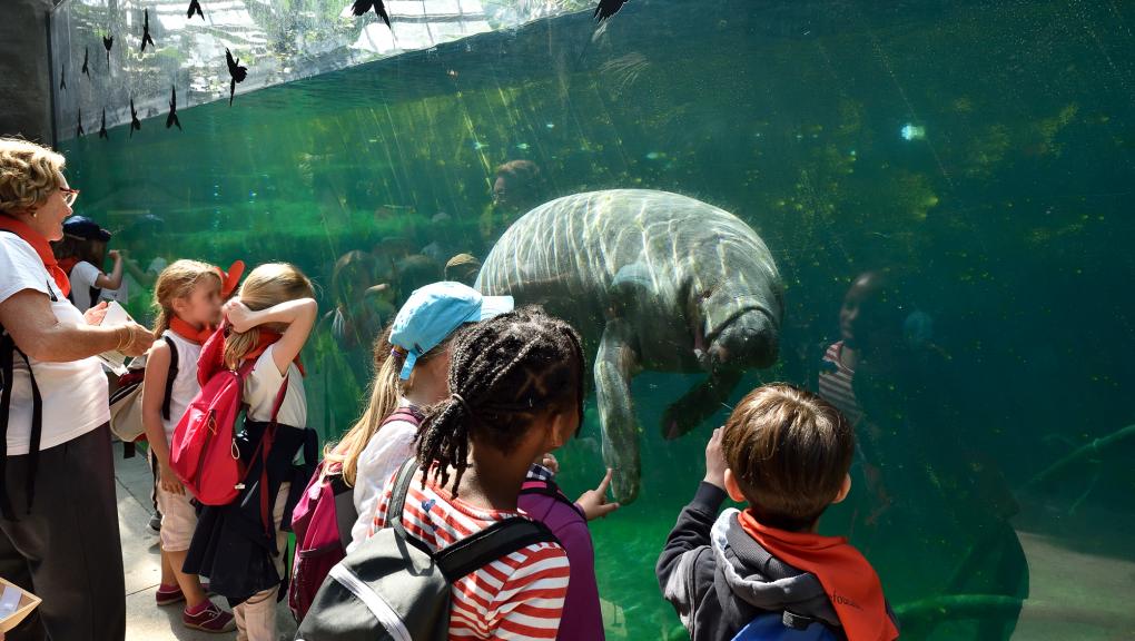 Bassin des lamantins dans la grande serre © MNHN – F-G. Grandin