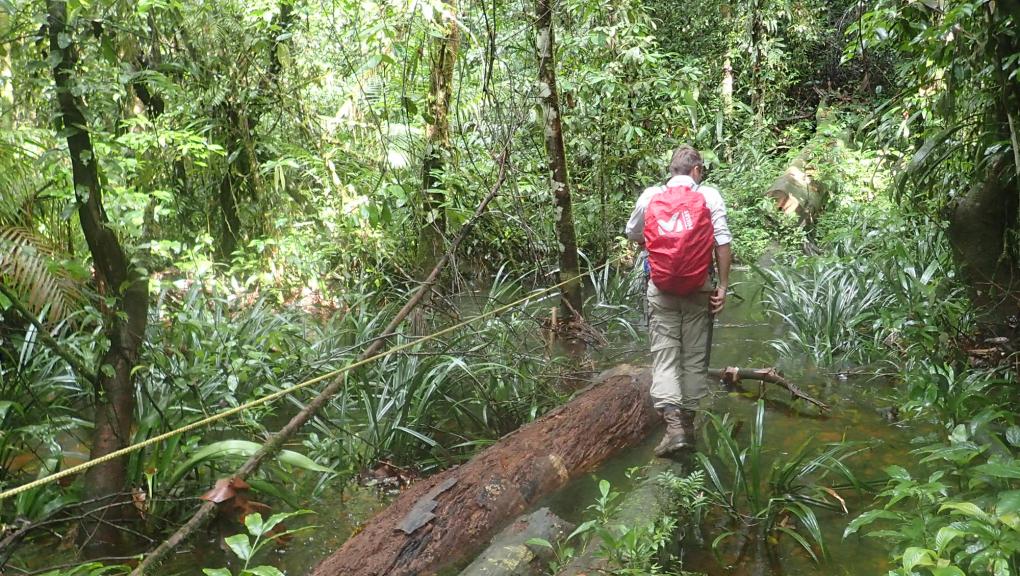 Expédition scientifique en Guyane française dans la Réserve naturelle des Nouragues © MNHN – O. Marquis