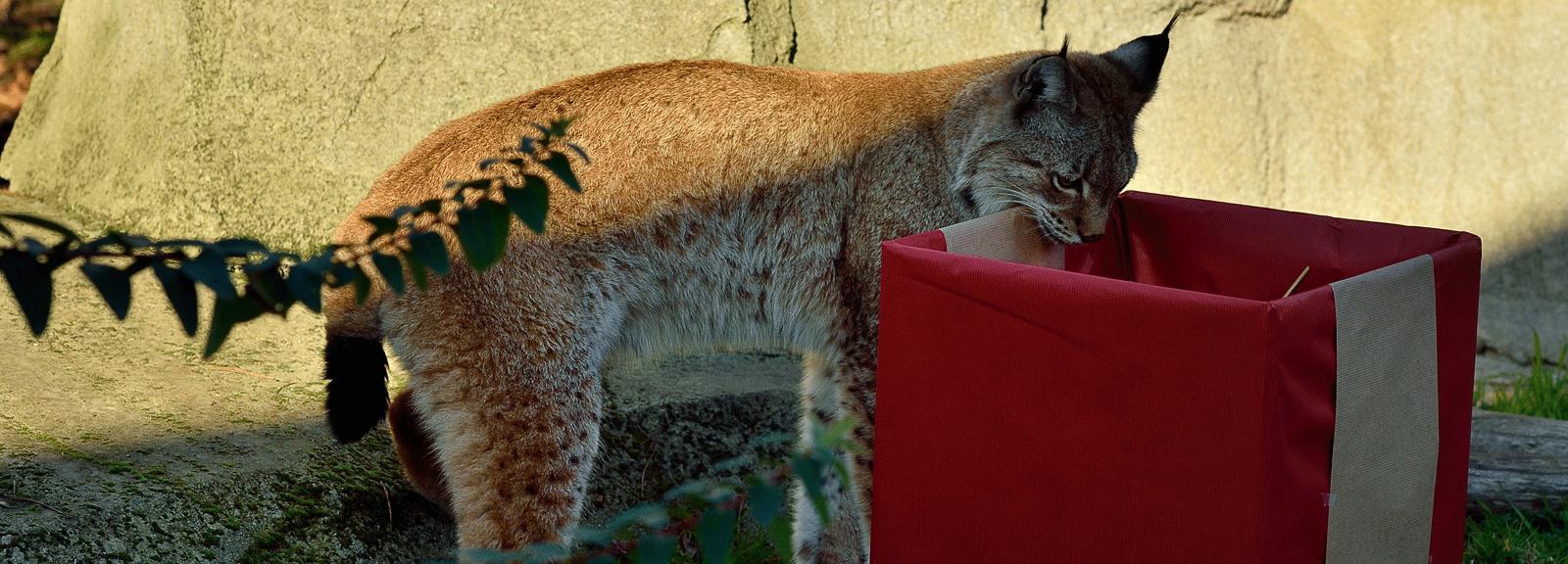 Noël au zoo © MNHN - F G. Grandin