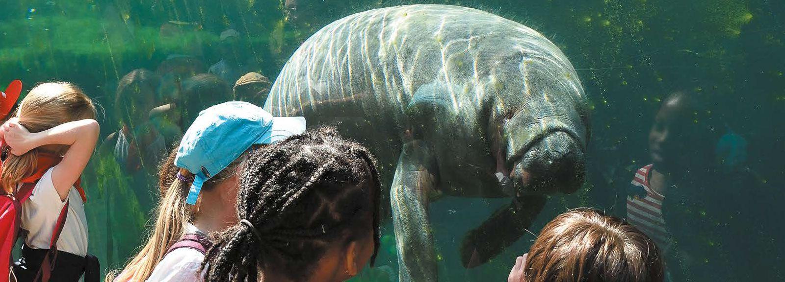 Le public devant le lamantin au Parc Zoologique de Paris © MNHN - F-G. Grandin