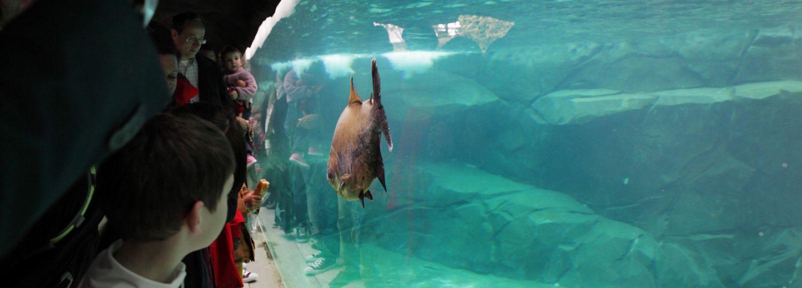 Bassin des lamantins © Manuel Cohen - MNHN