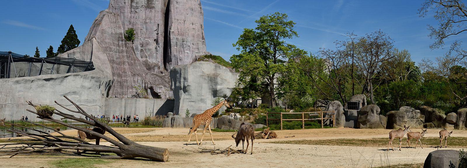 Plaine Sahel-Soudan où cohabitent différentes espèces dont le troupeau des girafes © MNHN - F-G Grandin