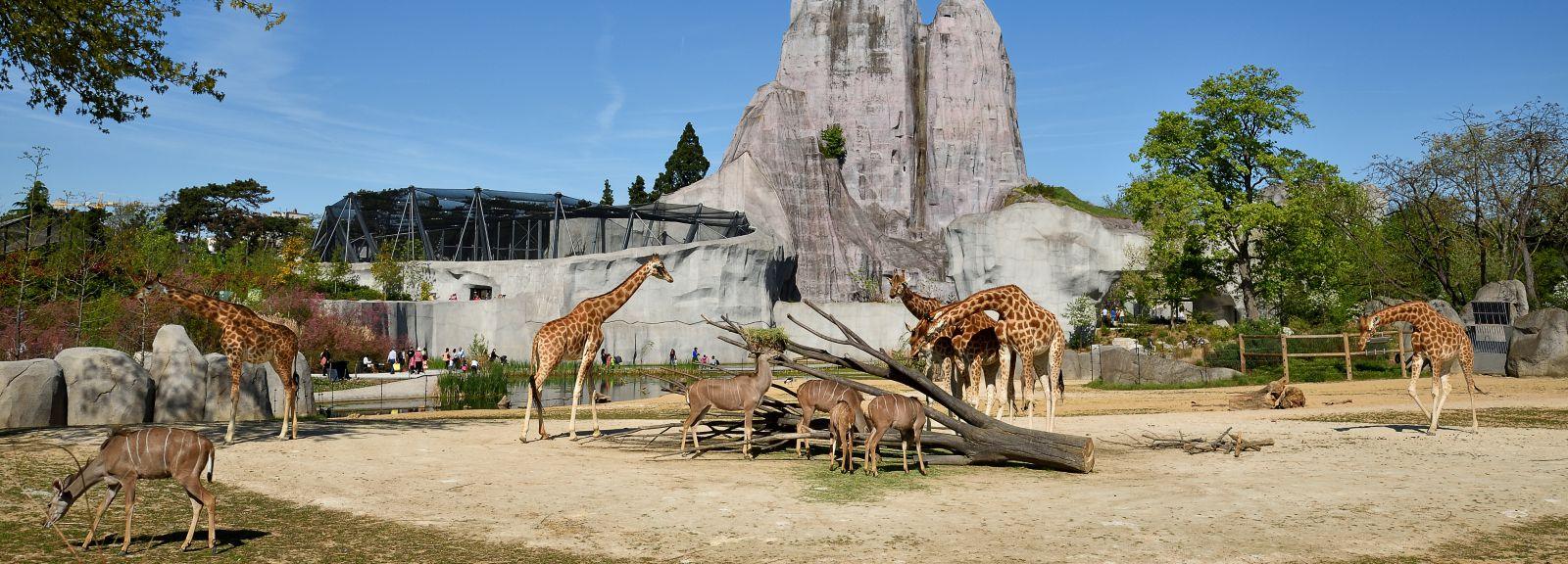 L'enclos des girafes.