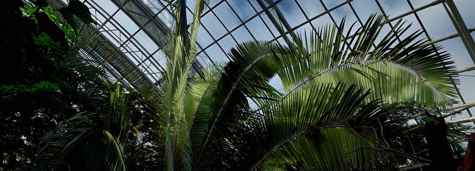 Serre tropicale du Parc zoologique de Paris © MNHN - F.-G. Grandin