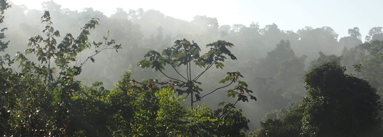 La Réserve naturelle des Nouragues en Guyane française © MNHN – O. Marquis