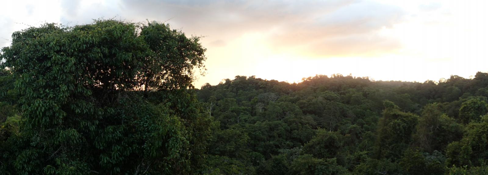 Vue sur la Réserve naturelle des Nouragues en Guyane française © MNHN – O. Marquis