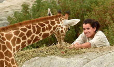 Girafe avec une soigneuse © F-G Grandin - MNHN