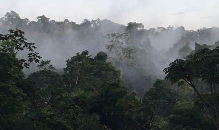 Réserve naturelle des Nourages en Guyane française © MNHN - O. Marquis