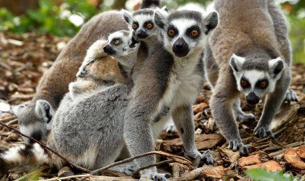 Bien-aimé Les animaux   Parc Zoologique de Paris FN86