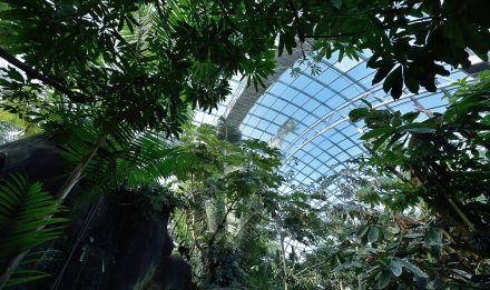 La Grande Serre du Parc zoologique de Paris © MNHN - F.-G. Grandin