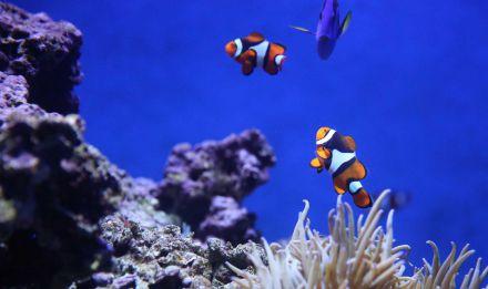 Récifs coralliens © wembley