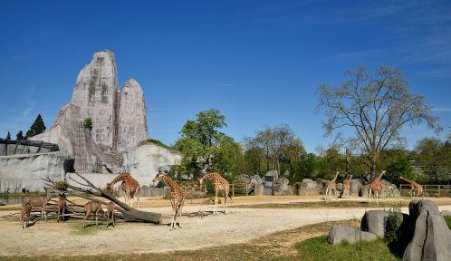 Parc zoologique de Paris © MNHN - F-G. Grandin