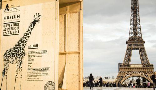 La caisse d'Adeline la Girafe sur le Parvis des Droits de l'Homme © A. Février / Ubi bene