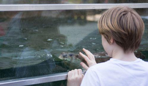 Enfant devant le bassin des loutres, en biozone Europe © Arnaud Brecht