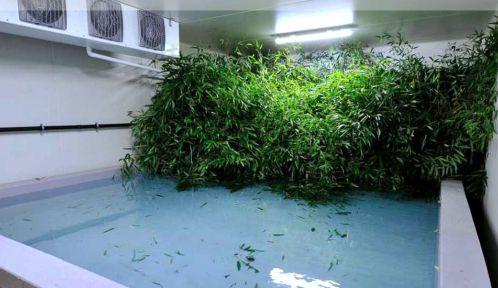 Le bambou stocké en chambre froide © MNHN - F. Grandin