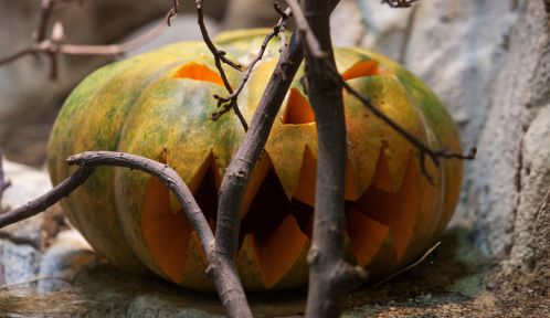 Halloween © MNHN - Samuel Picas