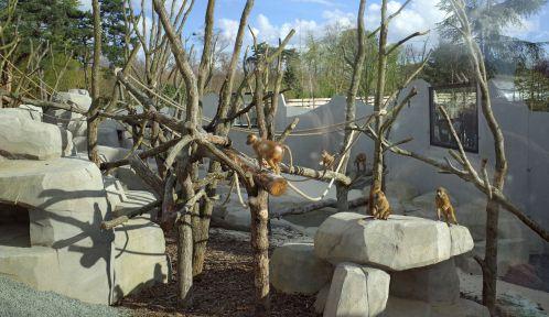 Enclos des babouins de Guinée © MNHN - F-G. Grandin