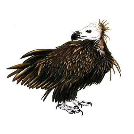 Comment s'appelle ce vautour ? À toi de retrouver son nom !