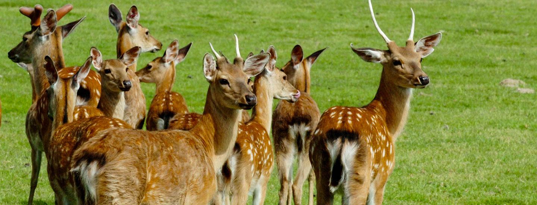R serve zoologique de la haute touche haute touche animal for Zoo haute touche